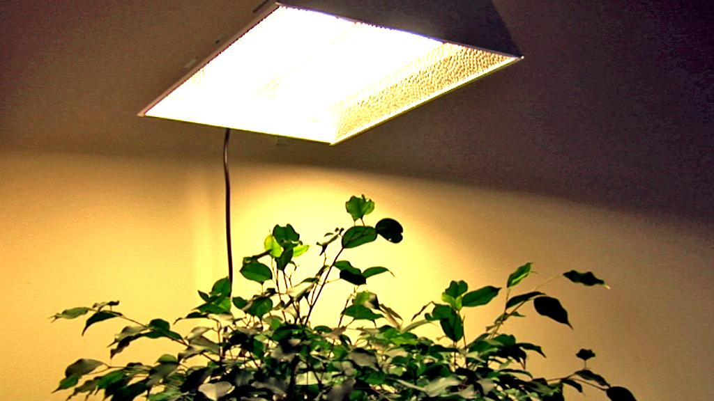 ecolux tech grow lights at winlights mobile deluxe interior